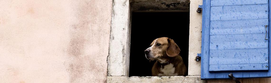 cane-alla-finestra
