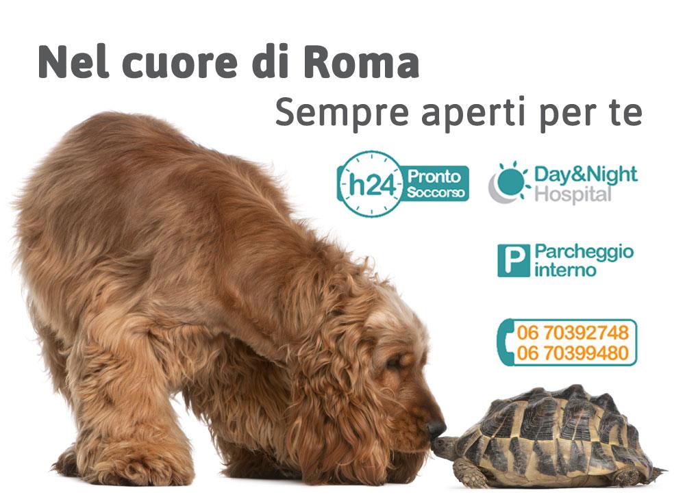 Clinica Veterinaria Roma: pronto soccorso h24 per animali