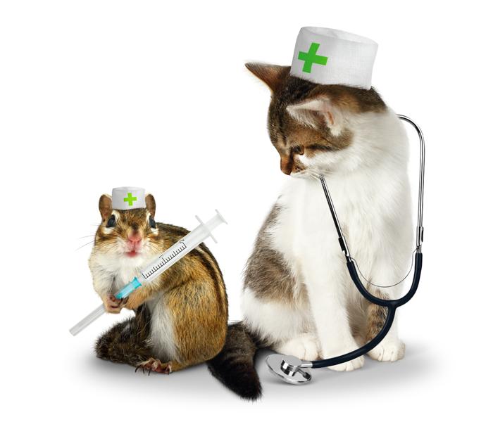 Basi di primo soccorso veterinario