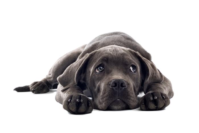 Urgenze veterinarie: come riconoscerle
